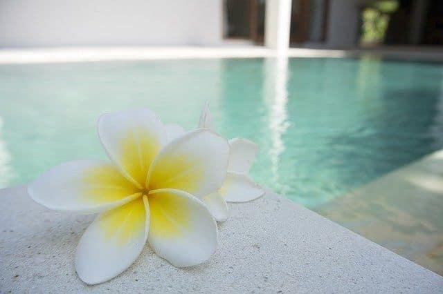 une piscine et une fleur